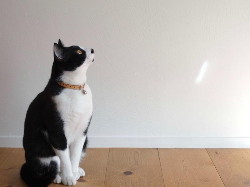 23猫の迷子首輪_01