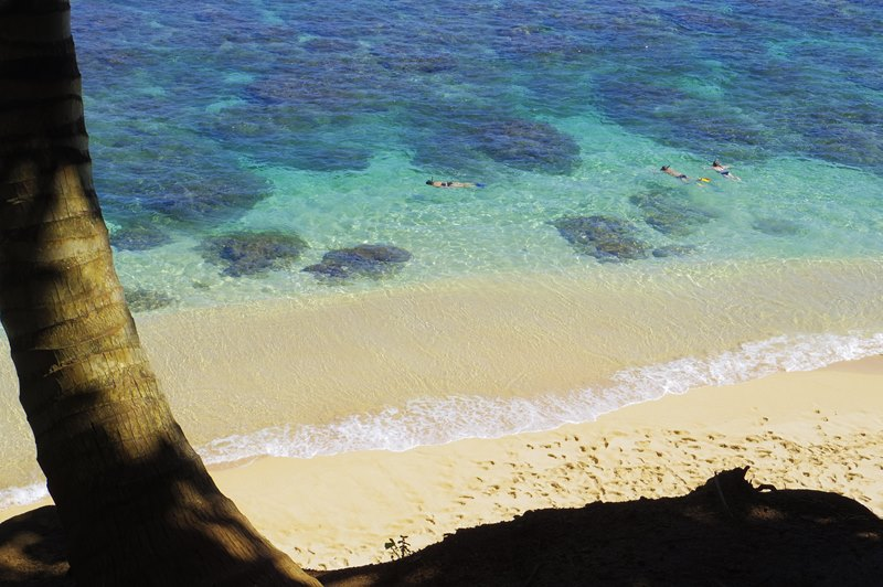 hawaii繝上Ρ繧、繝輔y繝ュ繧ッ繧・IMGP1227